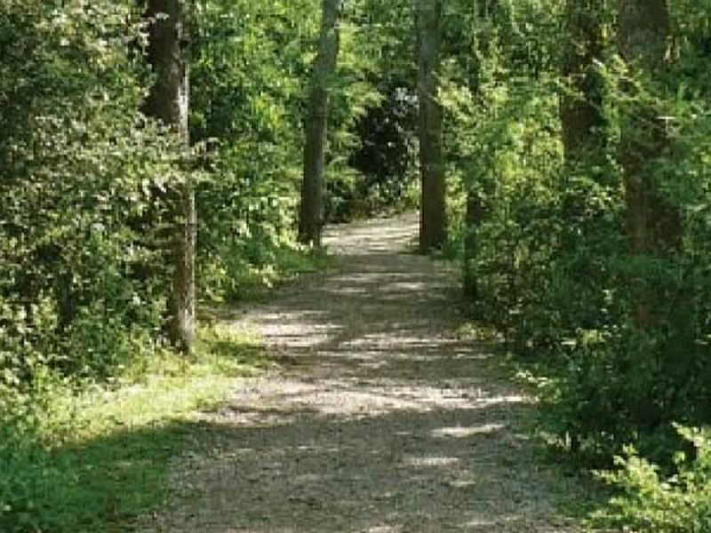 The town of Mount Pleasant plans to start maintaining existing walking trails in the area so...